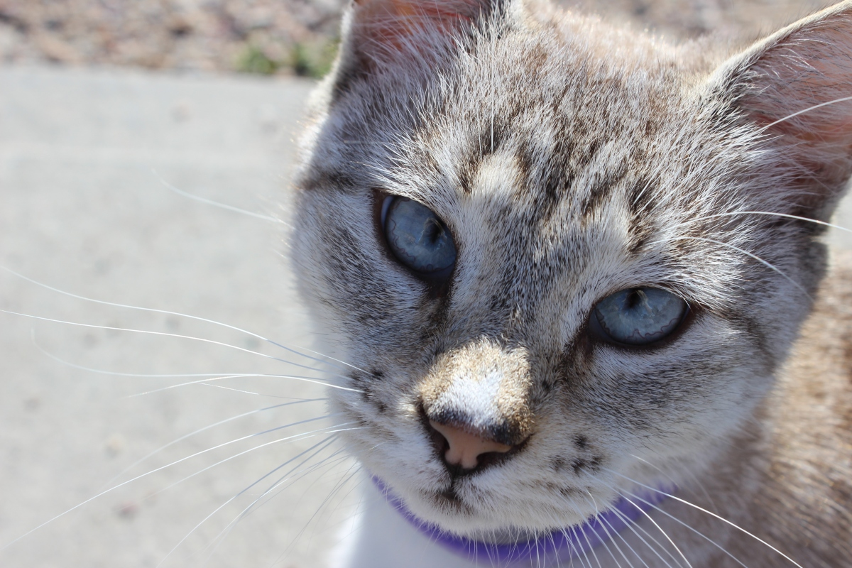 Old North End: A Neighborhood of Immigrants Both Human and Feline