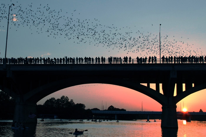 Congress Avenue Bridge, bats, free-tailed bats, Austin, Texas, free things to do, living local, bats take flight, theknot.com
